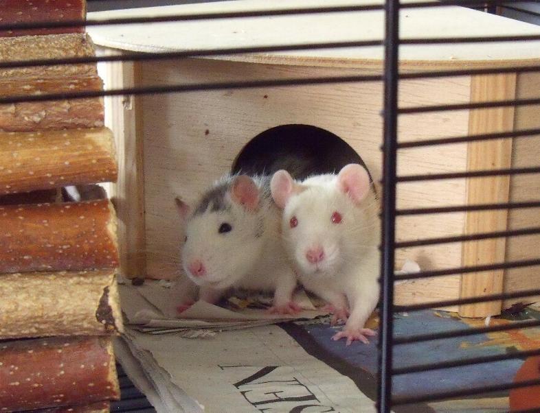 Alfons and Tony