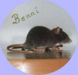 Benni-Baby