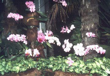 Orchids on Isle Mainau
