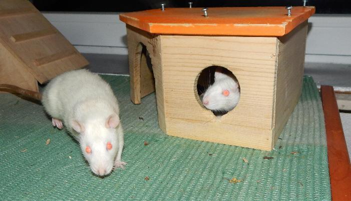 Niki and Beki