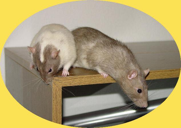 Seppl and Ratzi